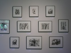 a selection of Susan's Drawings